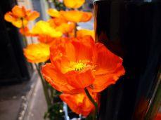 Viaduc des Arts. Oblíbená květina pařížských uměleckých fleuristů: mák.