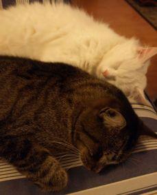Dobrou noc, Kluku a Chardone! Dobrou noc, strýčku Méďo!