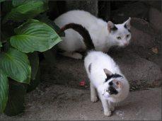Praprapračeská kočka.