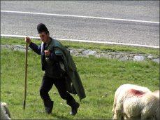 V okolí se pasou tisíce ovcí a prasat.