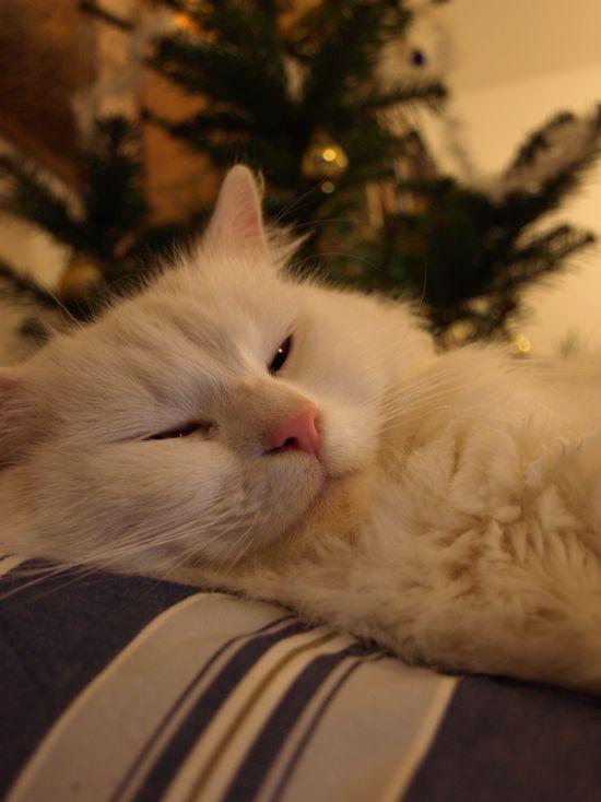 Tato kočka nijak nesouvisí s tématem článku, ale zdálo se mi, že je tady moc textu. Jmenuje se Chardonnay a je to kocour-vošoust, okolí je letos zaplaveno bílými koťaty.