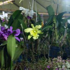 orchid_market_krabi_romana_granatova (13)