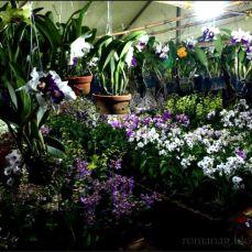 orchid_market_krabi_romana_granatova (14)