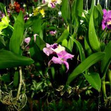 orchid_market_krabi_romana_granatova (15)