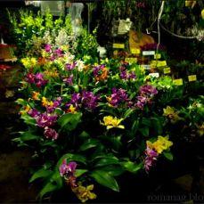 orchid_market_krabi_romana_granatova (17)