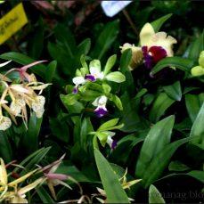 orchid_market_krabi_romana_granatova (18)