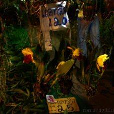 orchid_market_krabi_romana_granatova (19)