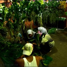 orchid_market_krabi_romana_granatova (21)