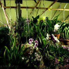 orchid_market_krabi_romana_granatova (24)