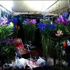 orchid_market_krabi_romana_granatova (28)