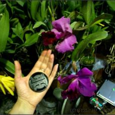 orchid_market_krabi_romana_granatova (31)