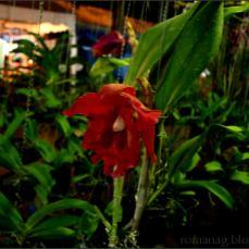 orchid_market_krabi_romana_granatova (32)