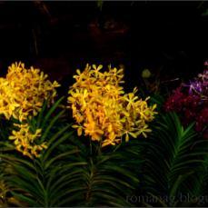 orchid_market_krabi_romana_granatova (37)