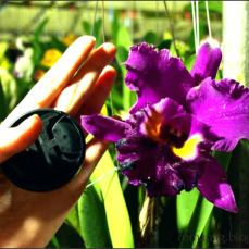 orchid_market_krabi_romana_granatova (42)