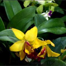 orchid_market_krabi_romana_granatova (43)