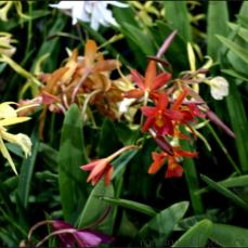 orchid_market_krabi_romana_granatova (48)