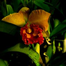 orchid_market_krabi_romana_granatova (52)