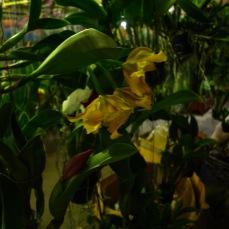 orchid market Krabi Romana Granatova