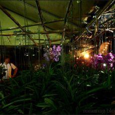 orchid_market_krabi_romana_granatova (58)
