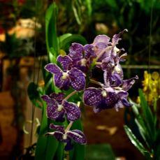orchid_market_krabi_romana_granatova (63)