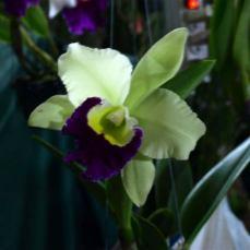 orchid_market_krabi_romana_granatova (7)