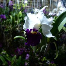 orchid_market_krabi_romana_granatova (8)