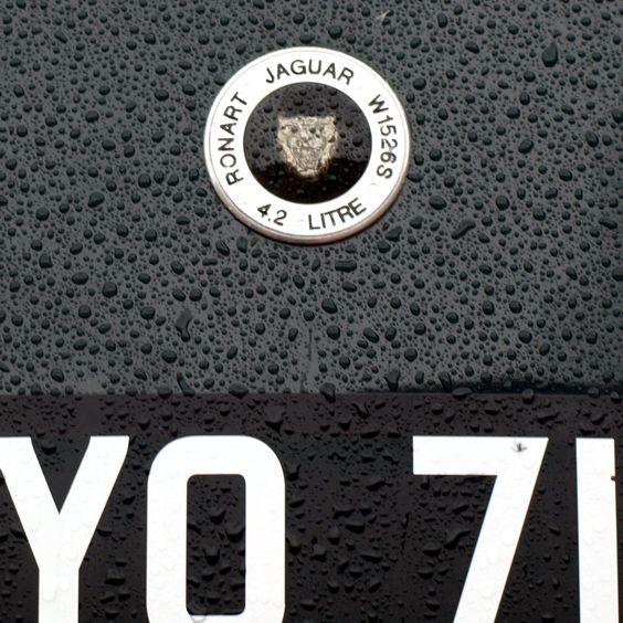 Jaguar romana granatova