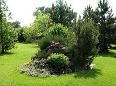 botanicus_ostra_garden_www.frangipani (12)