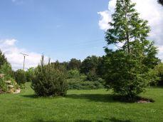 botanicus_ostra_garden_www.frangipani (15)