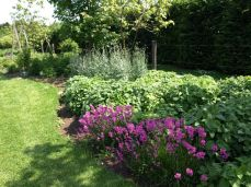 botanicus_ostra_garden_www.frangipani (25)