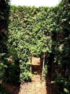 botanicus_ostra_garden_www.frangipani (33)