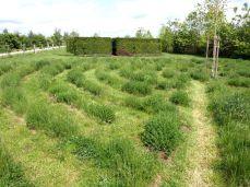 botanicus_ostra_garden_www.frangipani (34)