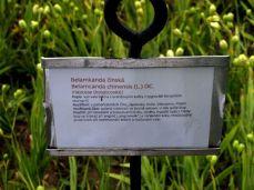 botanicus_ostra_garden_www.frangipani (38)