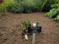 botanicus_ostra_garden_www.frangipani (41)
