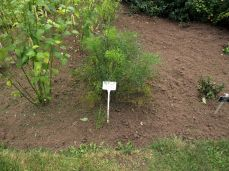 botanicus_ostra_garden_www.frangipani (42)