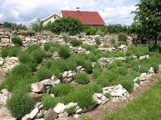 botanicus_ostra_garden_www.frangipani (5)