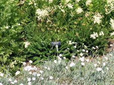 botanicus_ostra_garden_www.frangipani (6)