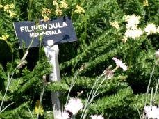 botanicus_ostra_garden_www.frangipani (7)