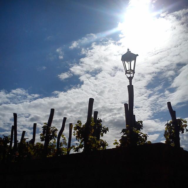 vysehrad vineyard