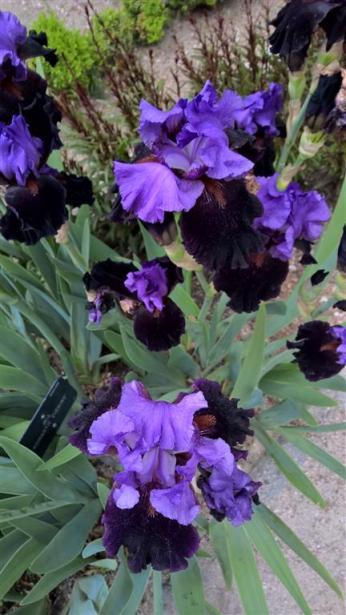 botanical garden madrid (1)