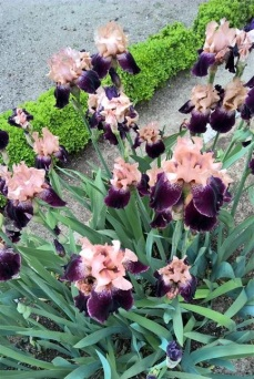 botanical garden madrid (14)