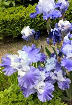 botanical garden madrid (8)