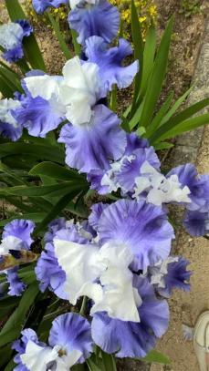 botanical garden madrid (9)